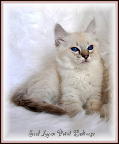 boss cat legacy